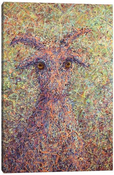 Wildgoat Canvas Art Print