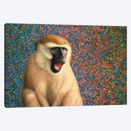 Yawn Canvas Print #JJN51} by James W. Johnson Art Print