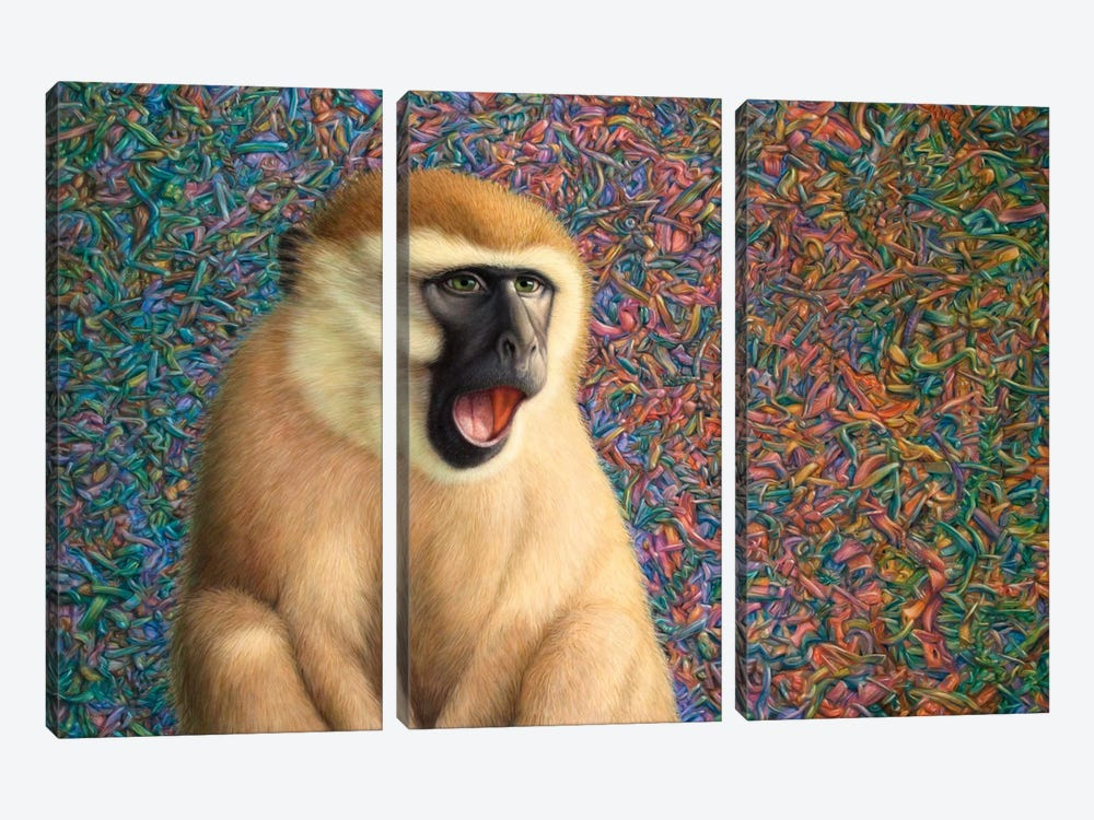 Yawn by James W. Johnson 3-piece Canvas Print