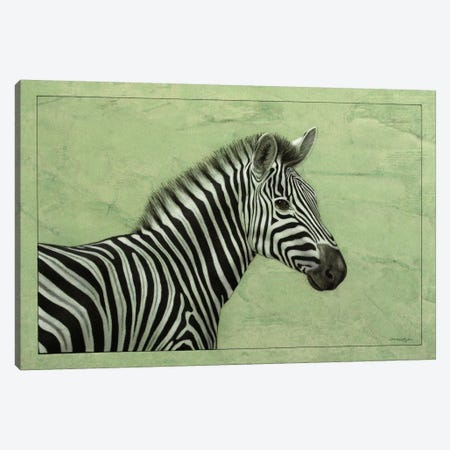 Zebra Canvas Print #JJN52} by James W. Johnson Canvas Art Print