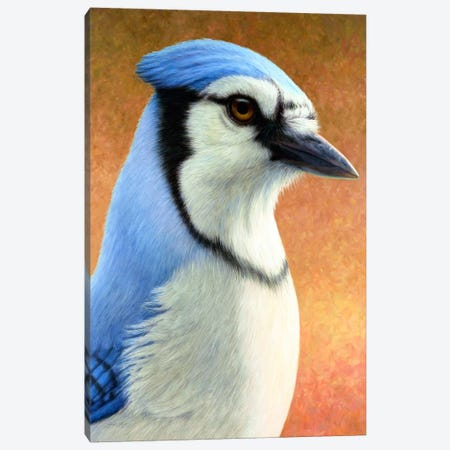 Blue Jay Canvas Print #JJN55} by James W. Johnson Canvas Artwork