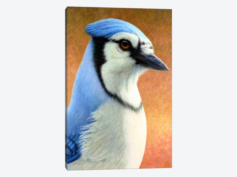 Blue Jay by James W. Johnson 1-piece Canvas Art Print
