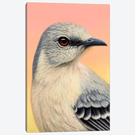 Mocking Bird Canvas Print #JJN59} by James W. Johnson Canvas Art Print