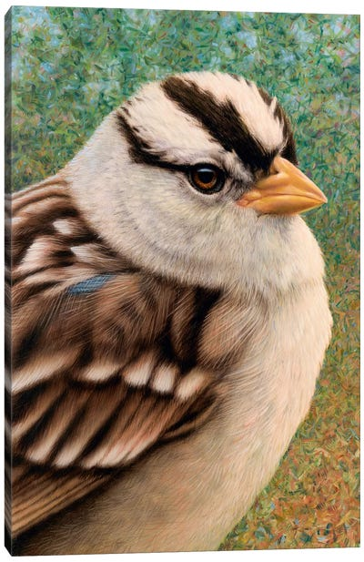 Sparrow Canvas Art Print