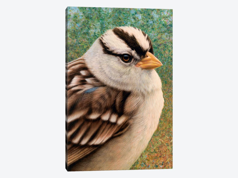 Sparrow by James W. Johnson 1-piece Canvas Print