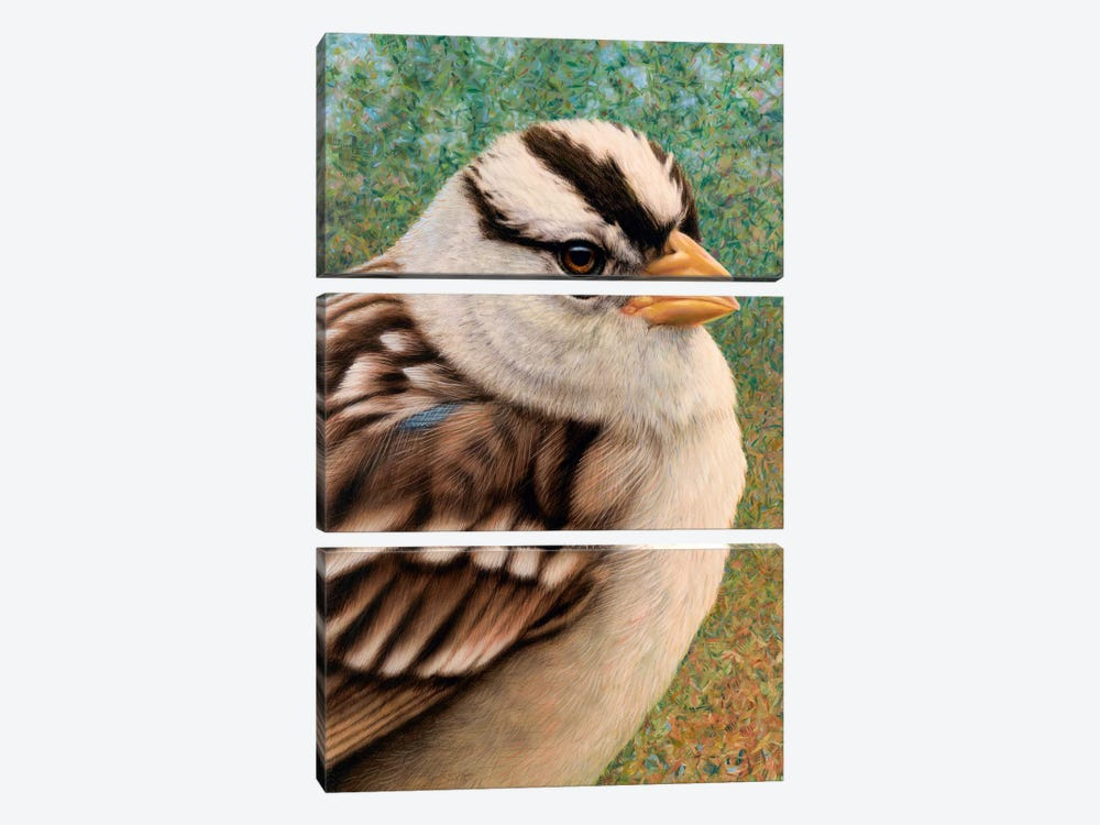 Sparrow by James W. Johnson 3-piece Canvas Print