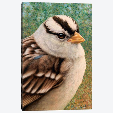 Sparrow Canvas Print #JJN60} by James W. Johnson Canvas Wall Art