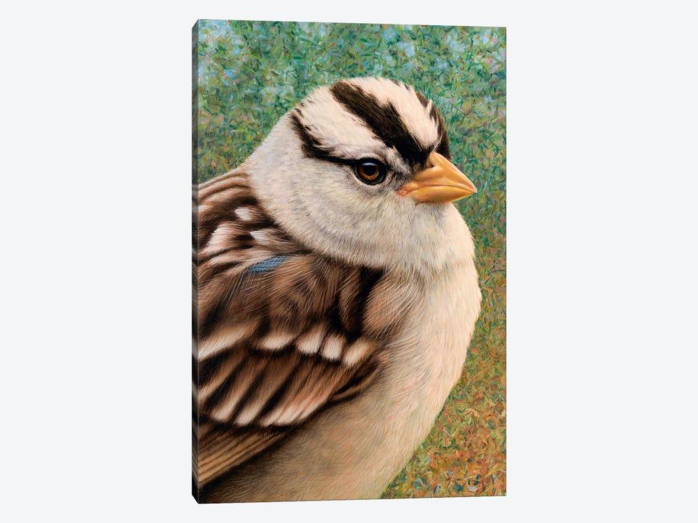 Sparrow by James W. Johnson 1-piece Canvas Print