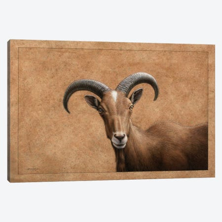 Barbary Ram Canvas Print #JJN7} by James W. Johnson Canvas Artwork