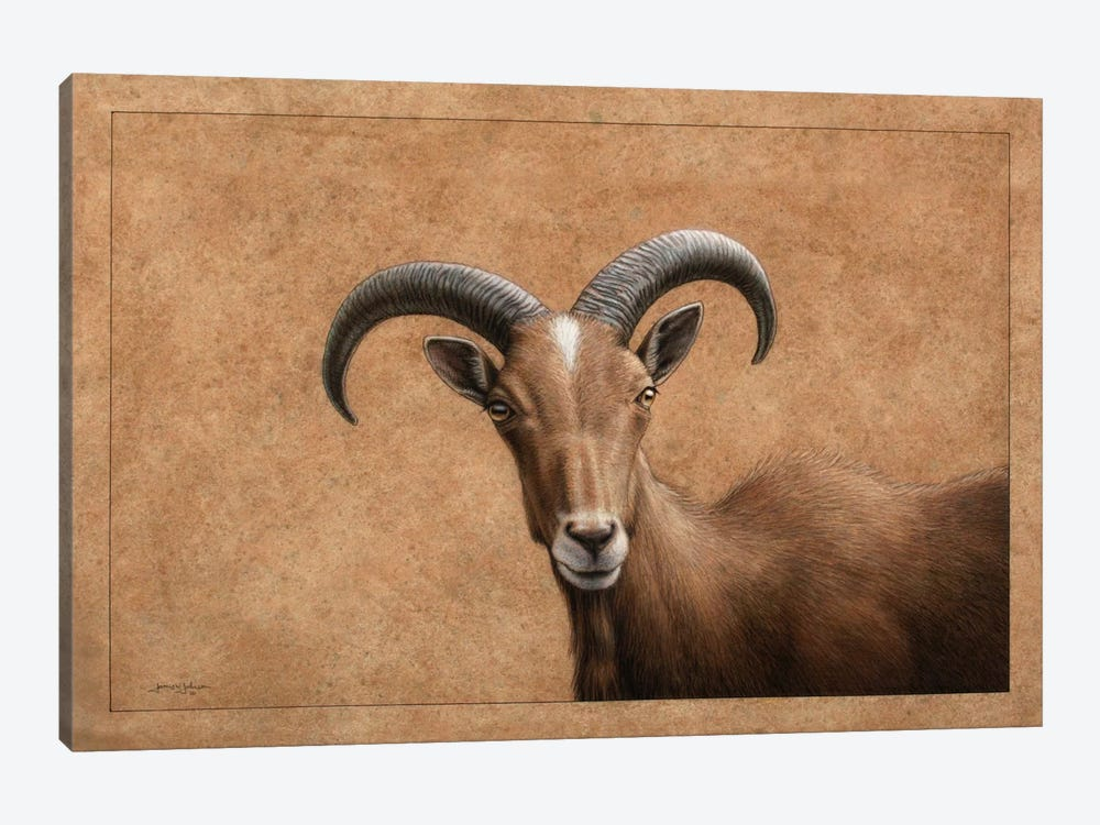 Barbary Ram by James W. Johnson 1-piece Art Print