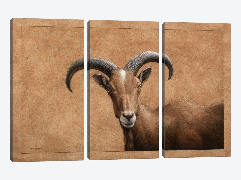 Barbary Ram by James W. Johnson 3-piece Art Print