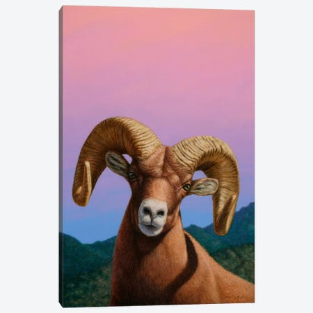 Bighorn Canvas Print #JJN9} by James W. Johnson Canvas Print