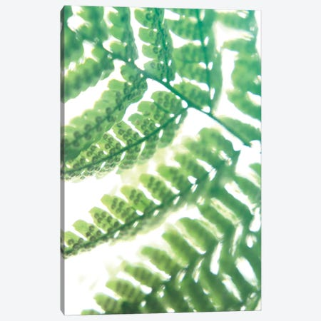 Fern Glow II Canvas Print #JJO26} by Jason Johnson Canvas Art