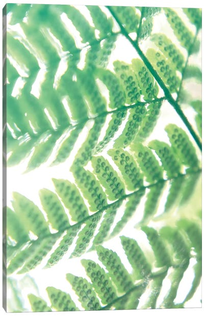 Fern Glow III Canvas Art Print