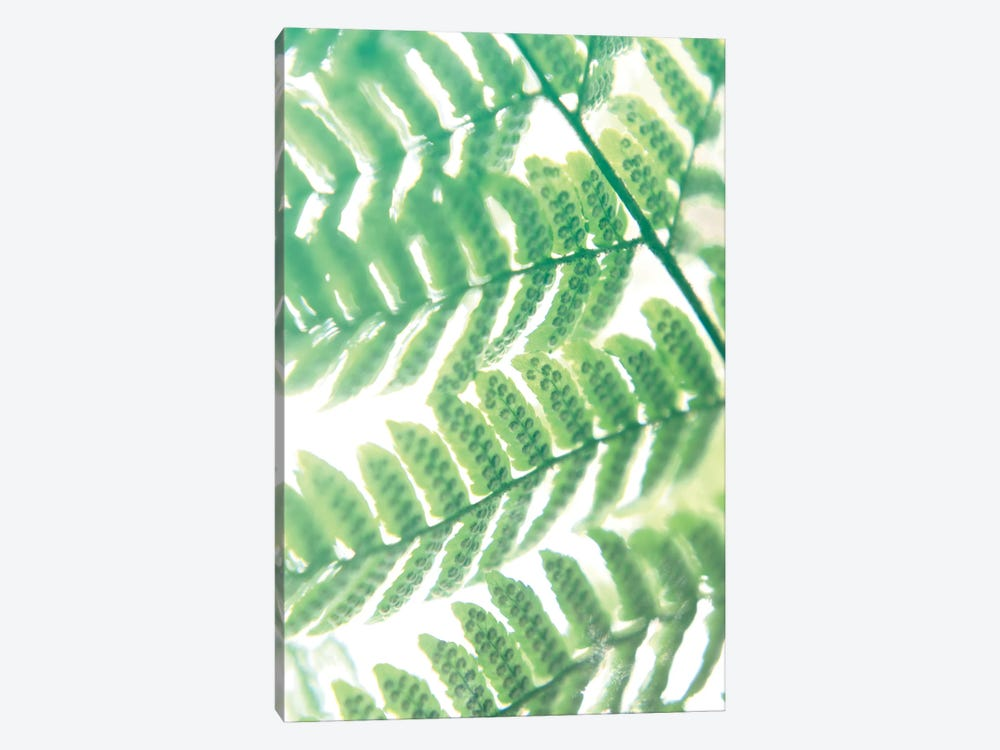 Fern Glow III by Jason Johnson 1-piece Canvas Art Print