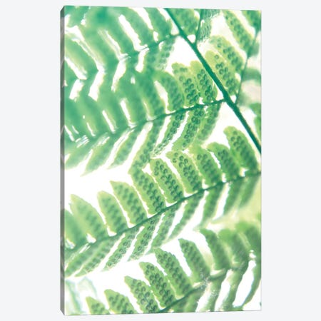 Fern Glow III Canvas Print #JJO27} by Jason Johnson Canvas Art