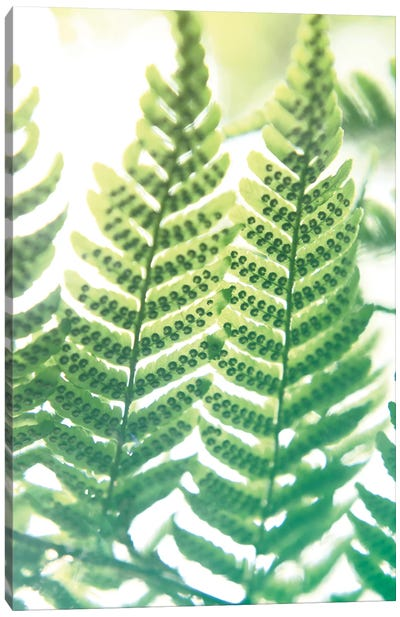 Fern Glow IV Canvas Art Print