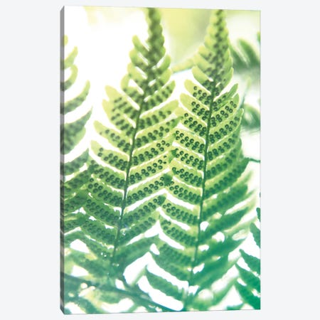 Fern Glow IV Canvas Print #JJO28} by Jason Johnson Canvas Print