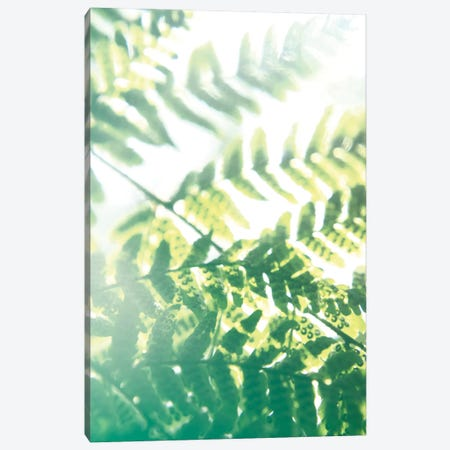 Fern Glow V Canvas Print #JJO29} by Jason Johnson Art Print