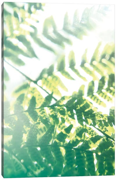 Fern Glow V Canvas Art Print