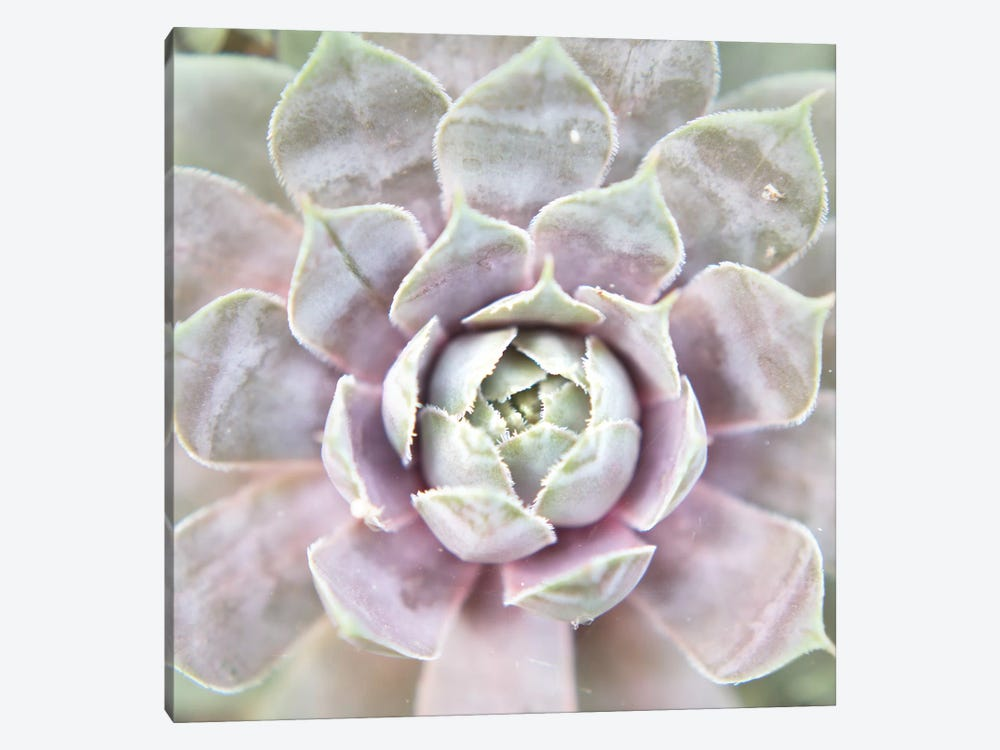 Succulent Glow I by Jason Johnson 1-piece Canvas Wall Art