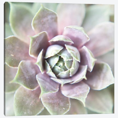 Succulent Glow II Canvas Print #JJO32} by Jason Johnson Canvas Wall Art