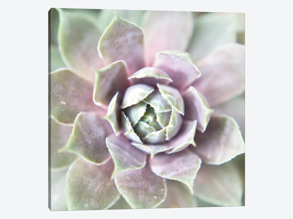 Succulent Glow II by Jason Johnson 1-piece Art Print