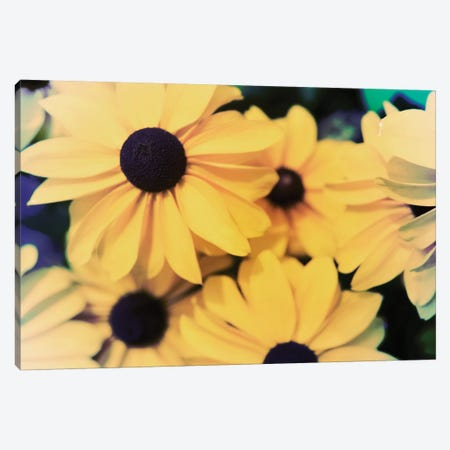 Susans I Canvas Print #JJO33} by Jason Johnson Canvas Art