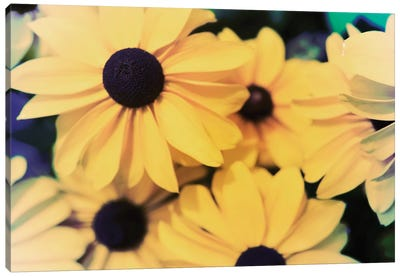 Susans I Canvas Art Print
