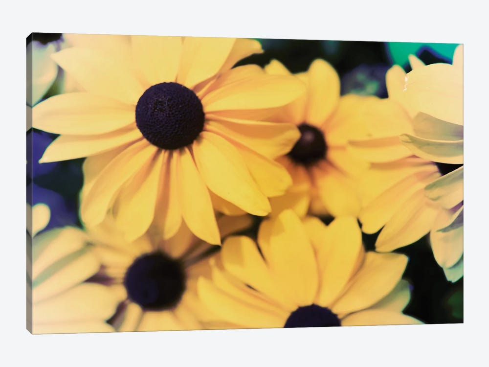 Susans I by Jason Johnson 1-piece Canvas Artwork