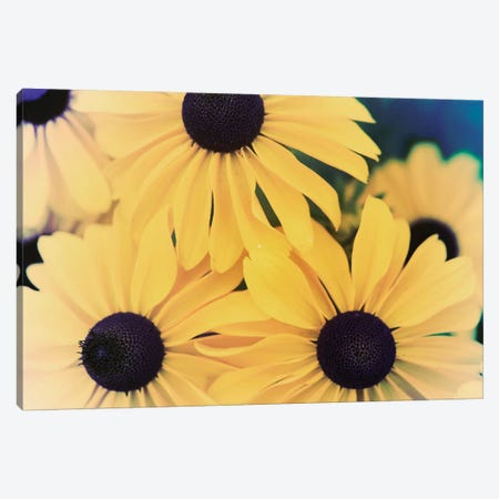 Susans II Canvas Print #JJO34} by Jason Johnson Canvas Art Print