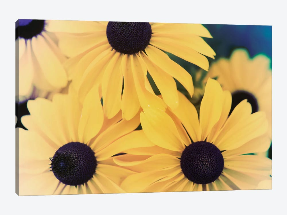 Susans II by Jason Johnson 1-piece Canvas Print