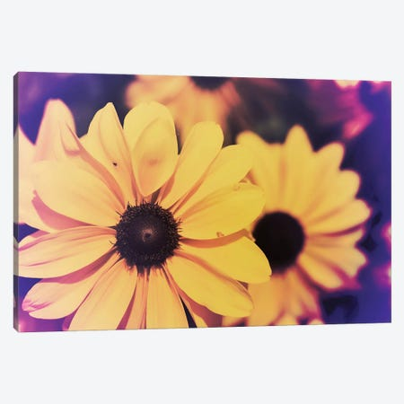 Susans III Canvas Print #JJO35} by Jason Johnson Canvas Art Print