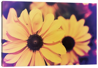 Susans III Canvas Art Print