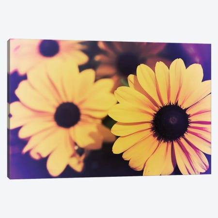 Susans IV Canvas Print #JJO36} by Jason Johnson Canvas Art Print