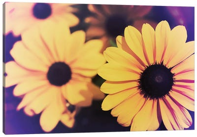 Susans IV Canvas Art Print