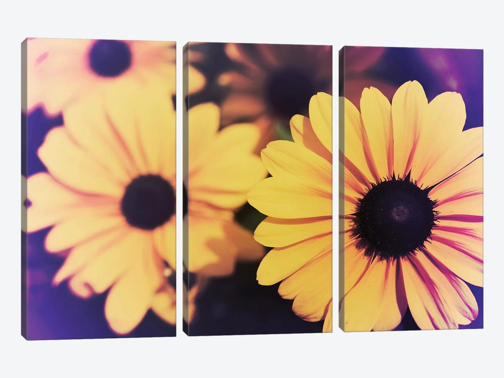 Susans IV by Jason Johnson 3-piece Canvas Art Print