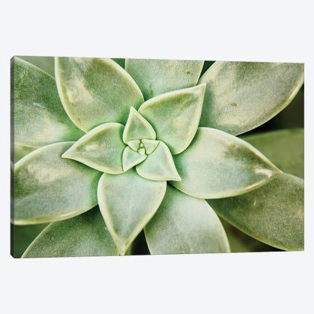 Spring Succulent I Canvas Print #JJO45} by Jason Johnson Canvas Wall Art