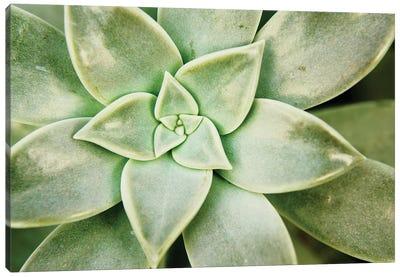 Spring Succulent I Canvas Art Print