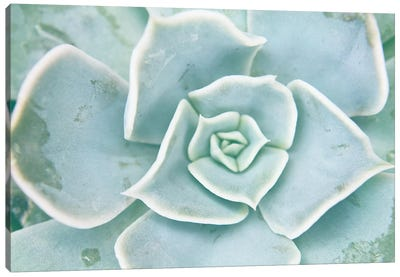 Storybook Succulent II Canvas Art Print