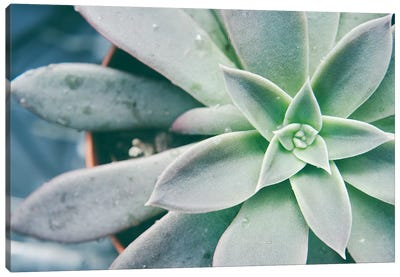 Storybook Succulent III Canvas Art Print
