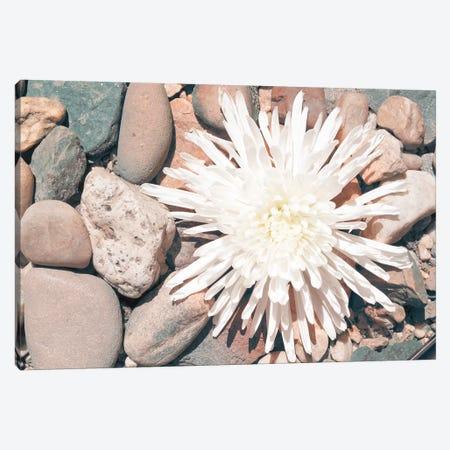 Pebble Beach II Canvas Print #JJO55} by Jason Johnson Art Print