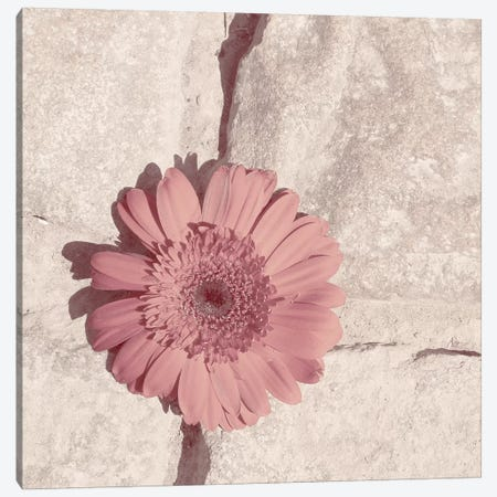 Stone Blossom I Canvas Print #JJO56} by Jason Johnson Canvas Print