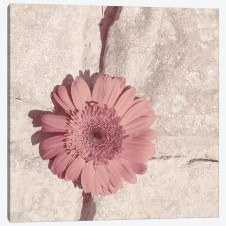 Stone Blossom I Canvas Print #JJO56} by Jason Johnson Canvas Print