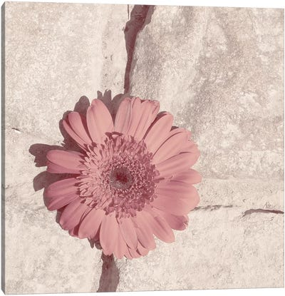 Stone Blossom I Canvas Art Print