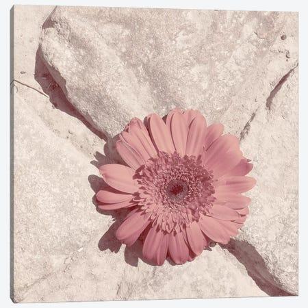 Stone Blossom II Canvas Print #JJO57} by Jason Johnson Art Print