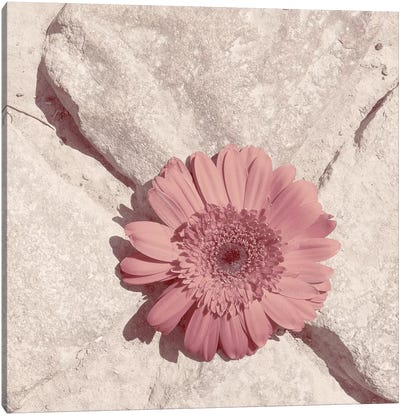 Stone Blossom II Canvas Art Print