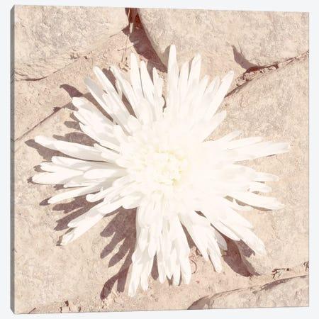 Stone Blossom III Canvas Print #JJO58} by Jason Johnson Canvas Wall Art