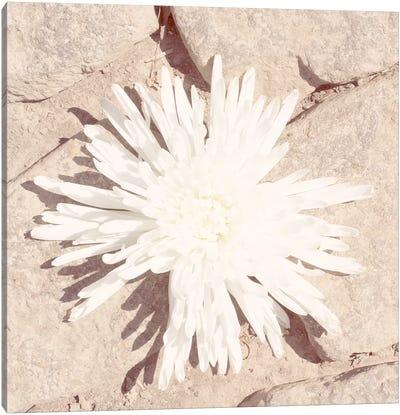 Stone Blossom III Canvas Art Print