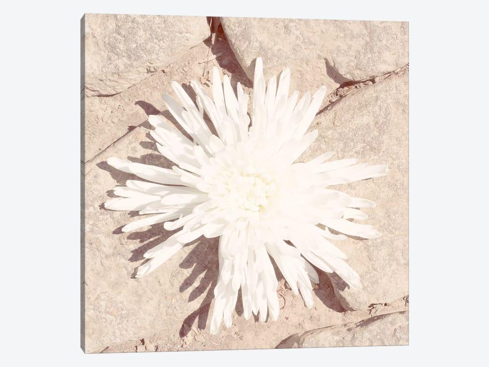 Stone Blossom III by Jason Johnson 1-piece Art Print